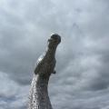 Another Impressive Kelpie Head