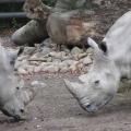 Zoo 26.10.2014 0001