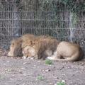 Zoo 26.10.2014 0002