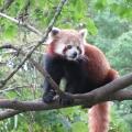 Zoo 26.10.2014 0003