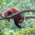 Zoo 26.10.2014 0004