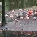 Zoo 26.10.2014 0008