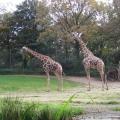 Zoo 26.10.2014 0009