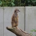 Zoo 26.10.2014 0010