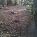 Lazy wolf