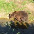 Alaska: Kodiak bear