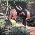 Africa: impressive Watussi