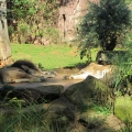 Africa: Even the lions are taking a break