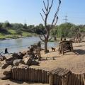 Africa: Baboon Island